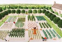 illustrations - garden