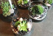 garden - terrarium & mini gardens