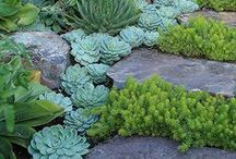 garden - succulent