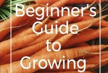 Grow Your Own Food / One of the most rewarding things a gardener can grow is their own fruits + veggies. We'll show you how!