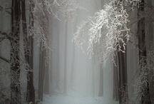 All Things: Winter / by Savannah Robin