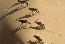 Africa inc. Egypt