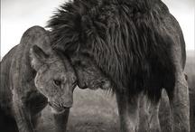 Animal Kingdom / Pets and animals