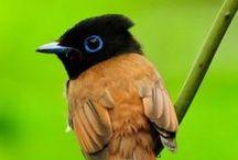 Birds / Birds i like