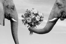 My favorite...The Elephant