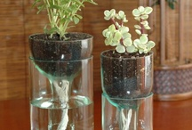 Glass Tastic!  / by sandy washburn
