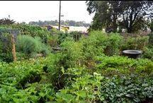 Cohutt's Garden Folly / Backyard food growing carnival