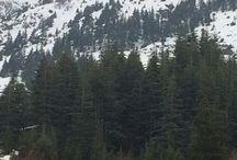BİZİM KÖYÜN DAĞLARI / Dağ ve ağaç ve çeçen