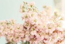 ♡ Wedding Flowers