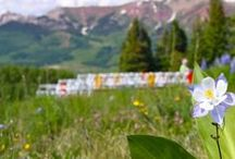 Weddings at Crested Butte Mountain Resort / The mountains are a great backdrop for that special day! Check out all the wedding venues we have right here on the resort. www.skicb.com/weddings