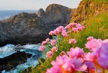 Ireland / by Nancy Wellborn