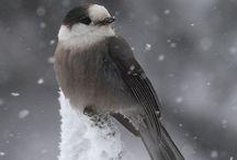 Ptačci