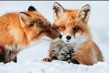foxes ♥