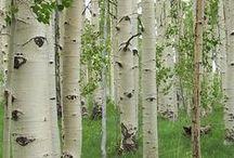 Puita / Puut ovat yksinkertaisesti lumoavia kauneudessaan.
