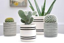 Cactus / Cactus garden
