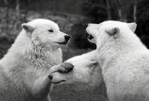 Animals/Wildlife / by Chorinea