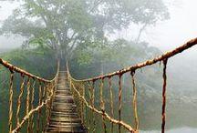 Dschungel-Feeling für Zuhause / Möbel und Accessoires in Grüntönen mit Blattmustern entführen euch in den tiefen Dschungel!