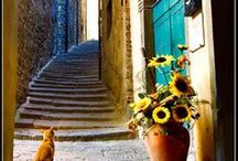 Cats Of Italy / Meet the cats abroad! Peaceful kitties enjoying some culture. Beautiful places to visit with your furry friend.