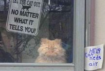 Cat Humour / Cat quotes and memes to make you laugh! Funny kitties for a great mood lifter!