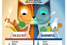 Homemade Cat Food / Improve your cat's health by trying one of these homemade cat food recipes. Give your kitties the best of the best treats and snacks. If your cat is acting finicky about his food these recipes might do the trick! Finicky eaters will love these flavors!