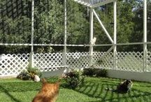 Cat Outdoor Oasis / Outdoor living spaces perfect for your indoor kitty or for keeping your outdoor at safe and happy outdoors. DIY projects and cool things to buy to making the best catios!