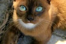 Cat Breeds / Rare, exotic, and domestic breeds from all over the world. Long hair, short hair, personality traits explained- unlock the perfect cat for you and your family!