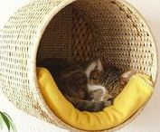 Cat Beds / Kitty beds galore! Inspiration for the perfect cat bed for your kitty, styled perfectly for your home decor. DIY, repurposed or store bought, your kitty will love a snuggly place to sleep the day away!