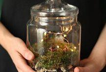 Terrariums - Garden in a Jar