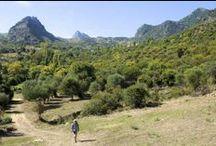 G R A Z A L E M A / Sierra de Grazalema near Ronda