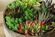 Hypertufa pots - succulents