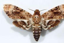 022.   V32.   Vlinders. / Wereldvlinders  Judith Harris.