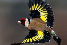 022.    V01.   Vogels (standvogels) / Foto's van vogels  Judith Harris