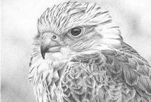 Birds- Pencil drawing