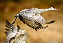 022.   V14.   Vogels uit Zweden / Vogels in Zweden