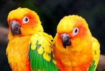 022.   V09.   Papegaaien en parkieten / Verzameld