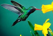 022.   V05.   Kolibries / Tropische vogels