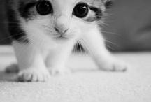 Why so Cute?