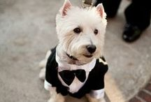 Wedding Dogs / Having your four legged furry family member at your wedding?   Love it!