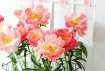 - Plants Love -
