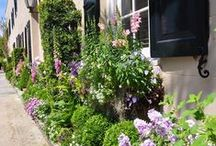 Window box gardens