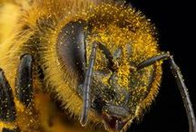 Beekeeping, How-To and Info / by Mary BB