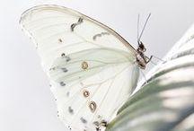 Butterflies / by J. Marie Ferrer-Stock