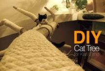- Cat Enclosure & DIY -
