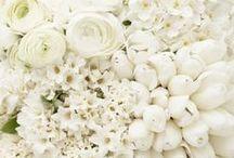 Valkoista