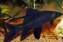 Fandom Fish Tanks / Heck yeah!