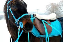 Everything Equestrian / Tips on choosing, caring for, and riding a horse.