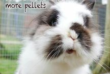 Rabbit Care and Breeds / ^^