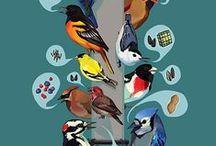 ornithologie au jardin / by Patricia Saulnier