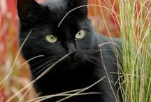 cats / by Diane Ashcraft