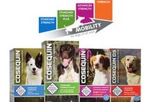 Which COSEQUIN® is Right for Your Pet / Nutramax Laboratories Veterinary Sciences, Inc. offers a variety of products for your pets to help provide for their wellbeing.